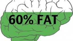 Hersenen bestaan voor 60% uit vet