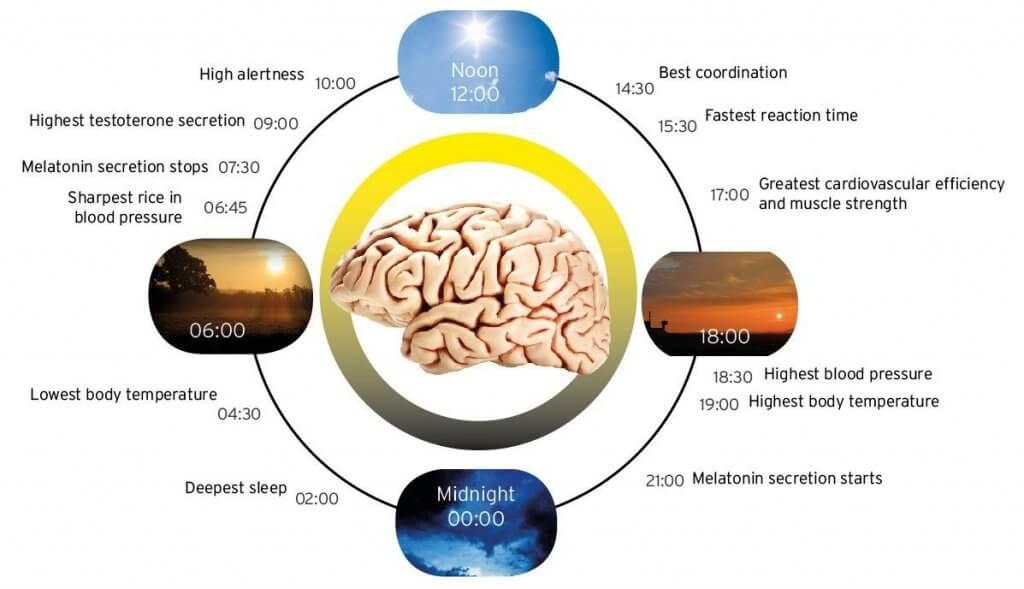 mélatonine et cycles du sommeil