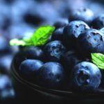 Blauwe Bessen Concentraat Verbetert Hersenwerking bij Ouderen