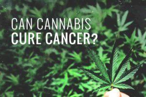 cannabis-kanker