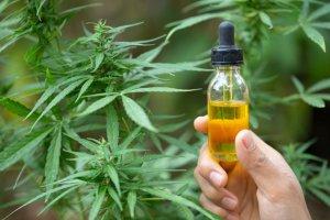 Een flesje CBD olie voor een cannabisplant
