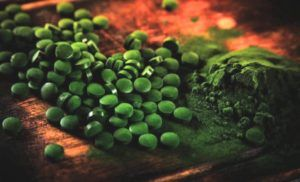 chlorella-poeder-en-tablet