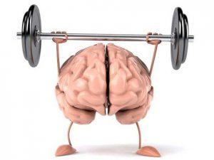 La L-carnitine soutient la fonction cérébrale
