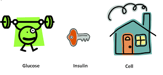 glucose-insuline-cel
