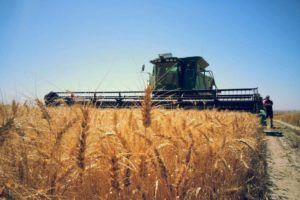 Tractor oogst graanveld op een zonnige dag