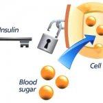 Wat Is Insuline en Hoe Werkt Het? + 10 Tips voor Diabetici