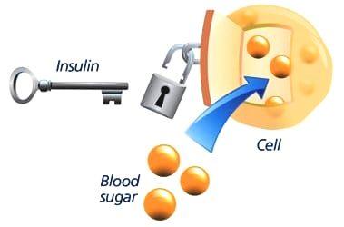 hoe-werkt-insuline
