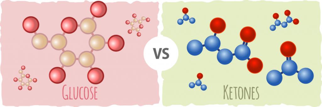 glucose vs cétone