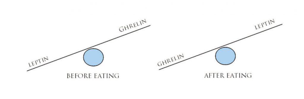 leptine et ghréline avant et après les repas