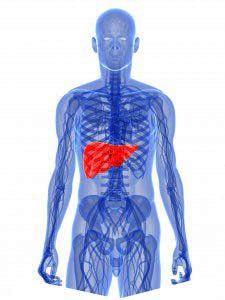 lichaam-reinigt-zichzelf-met-lever