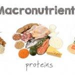 Wat Eiwitten / Proteïne Zijn + Wat de Essentiële Aminozuren zijn