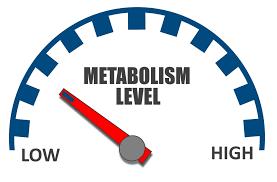 métabolisme lent