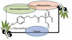 oleocanthal als gezonde antioxidant