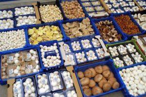 paddenstoelen ter verkoop op de markt