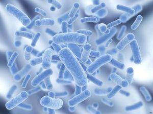 prebiotiques et probiotiques