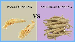 Panax ginseng et ginseng américain