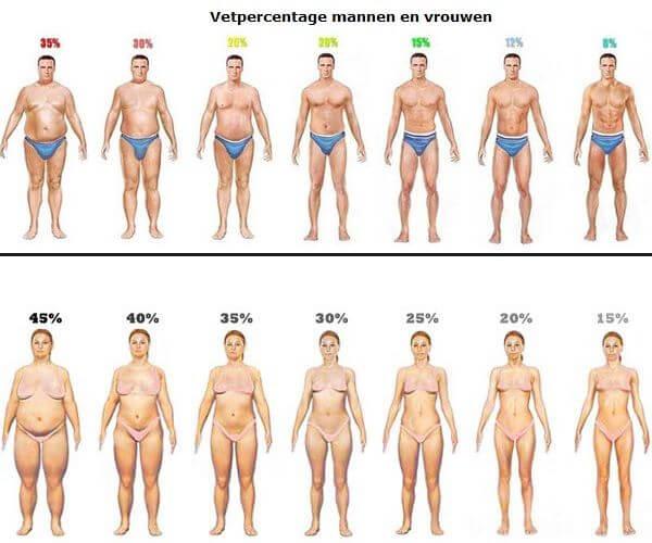 verschillende vetpercentages illustratie van mannen en vrouwen