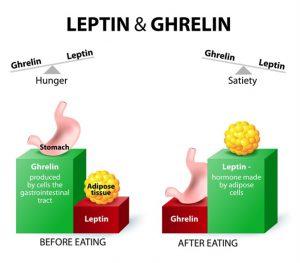 leptine et ghréline