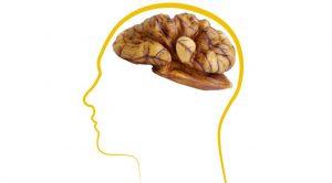 noix cerveau